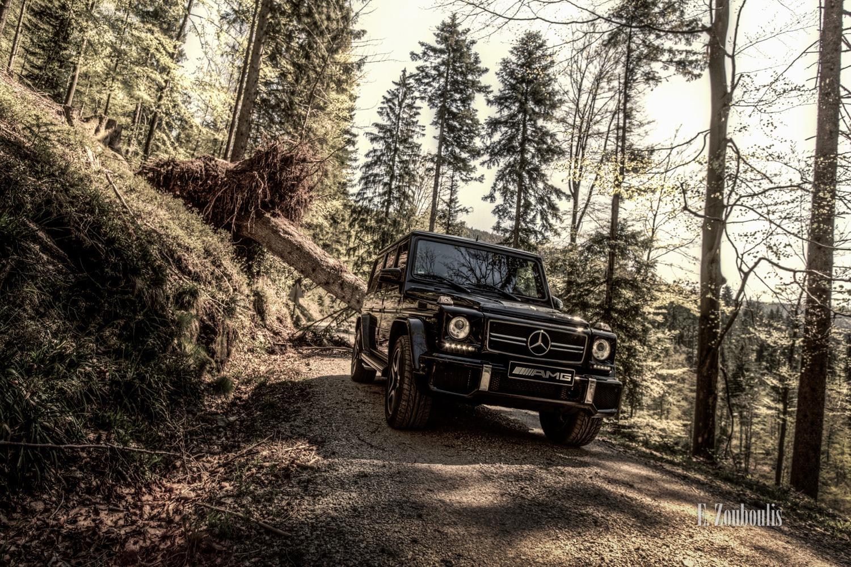 Der G63 AMG vor einem entwurzelten Baum im Wald